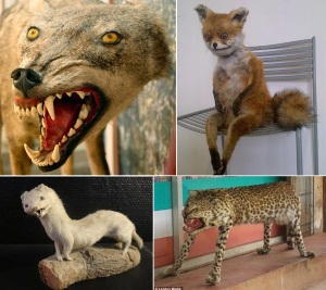 badtaxidermy